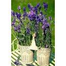 Textilposter Lavendel Motiv Frühling Sommer Blumen...